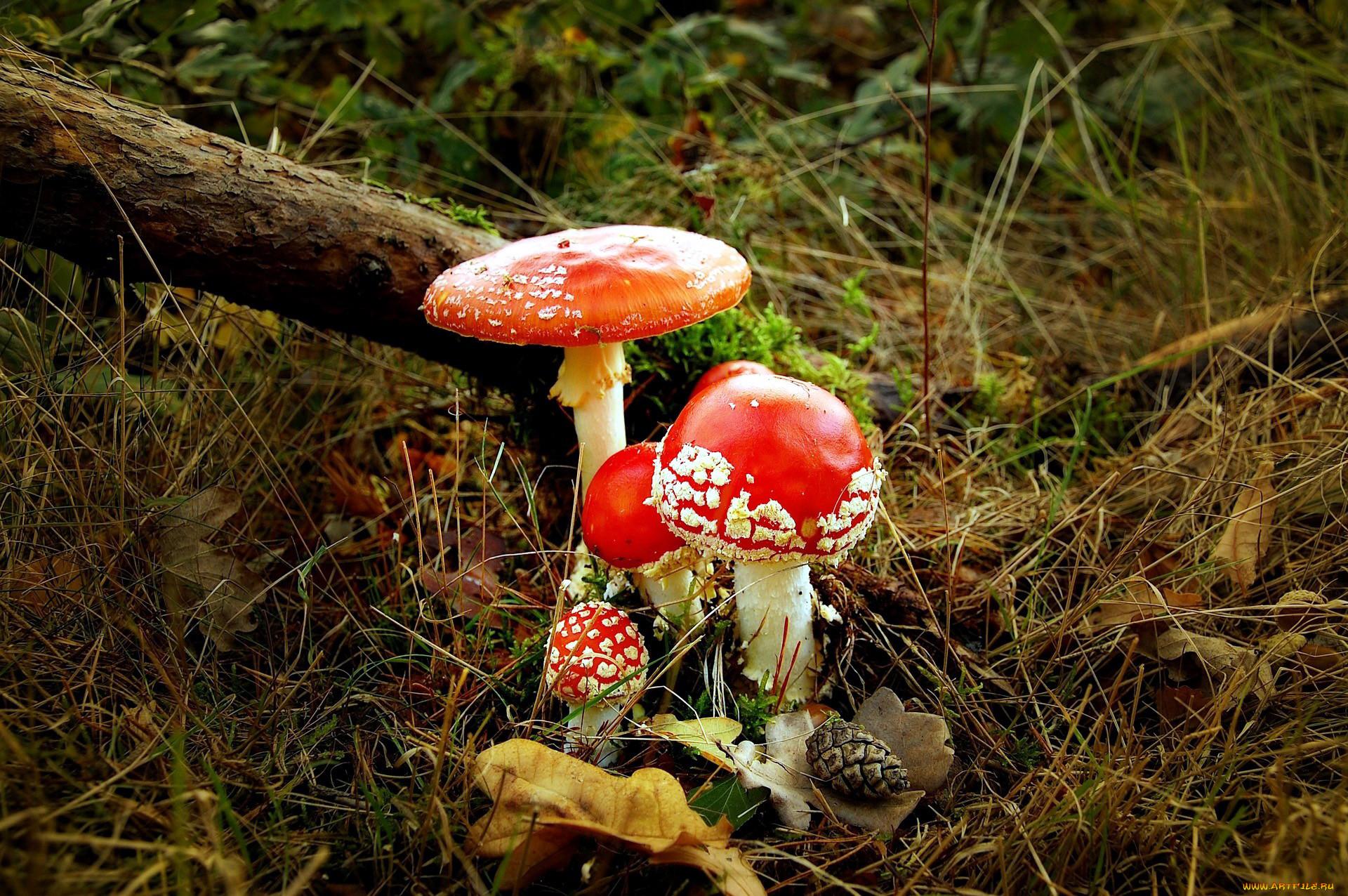 история картинки семейка грибов фотоаппарате нет отвертки